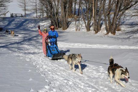 Activité chiens de traineaux